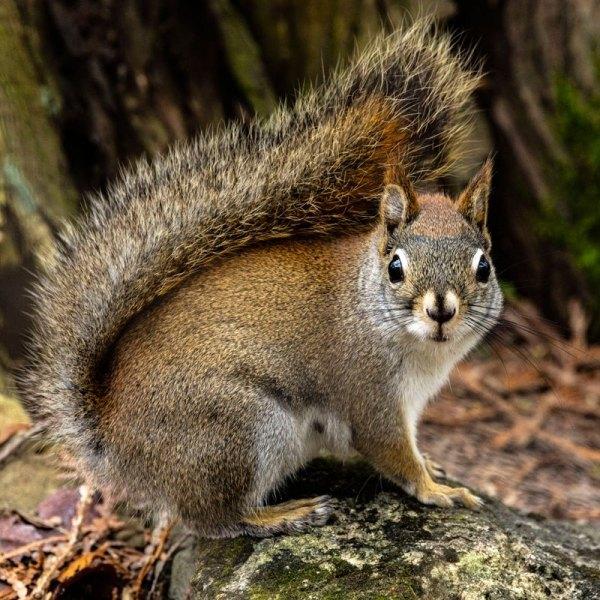 Squirrel01