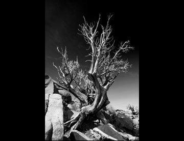 landscape-thumb